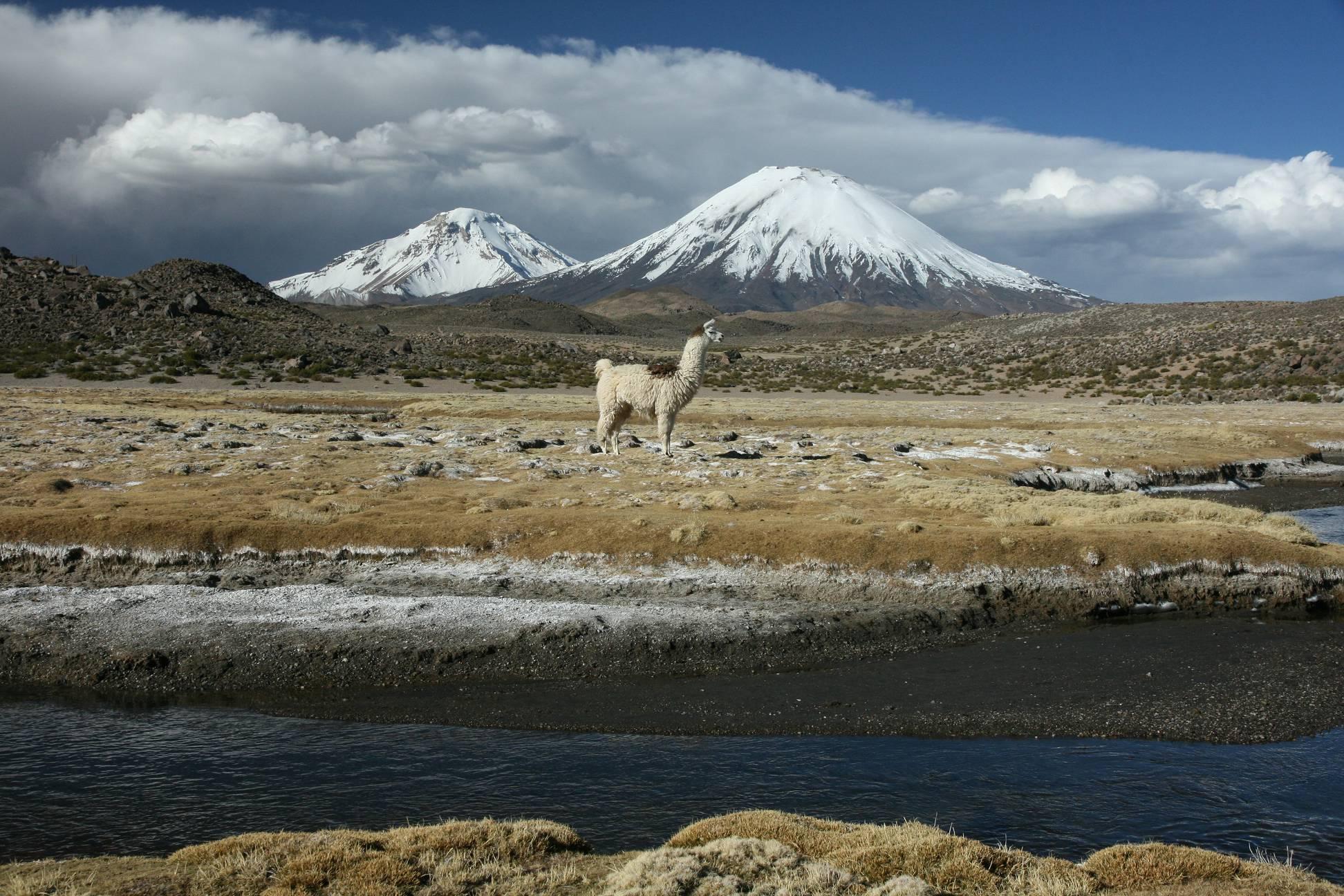 Königreich für ein Lama